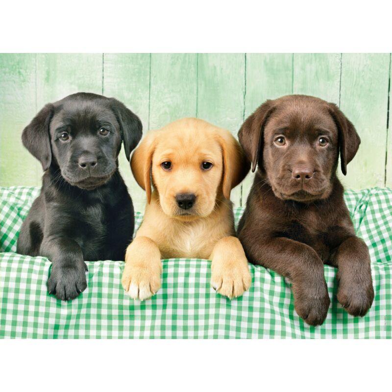 Labrador kiskutyák 1000 db-os puzzle - Clemetoni