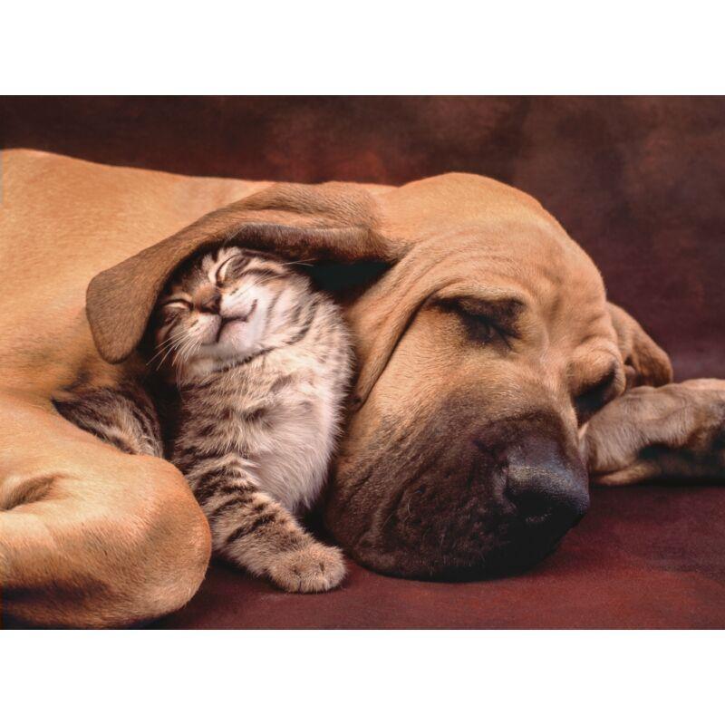 Kutya és cica pajtik 500 db-os puzzle - Clementoni