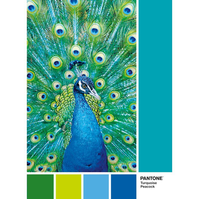 Pantone - Türkiz páva 1000 db-os puzzle - Clementoni
